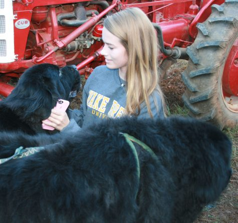 Freshman Mary Gillon pets the two puppies that were a hit at Ag Day.