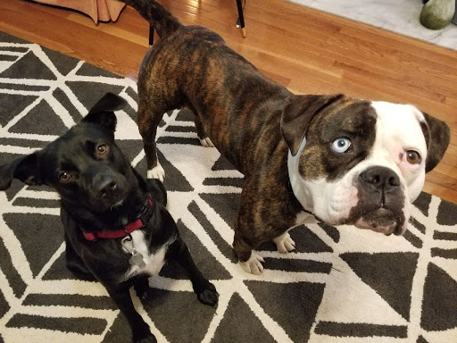 Kaley+Brennon+dogs