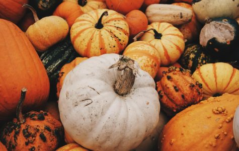 Many pumpkin patches are open to visit this fall. There are so many colors, shapes, and sizes of pumpkins and gourds you can choose from.